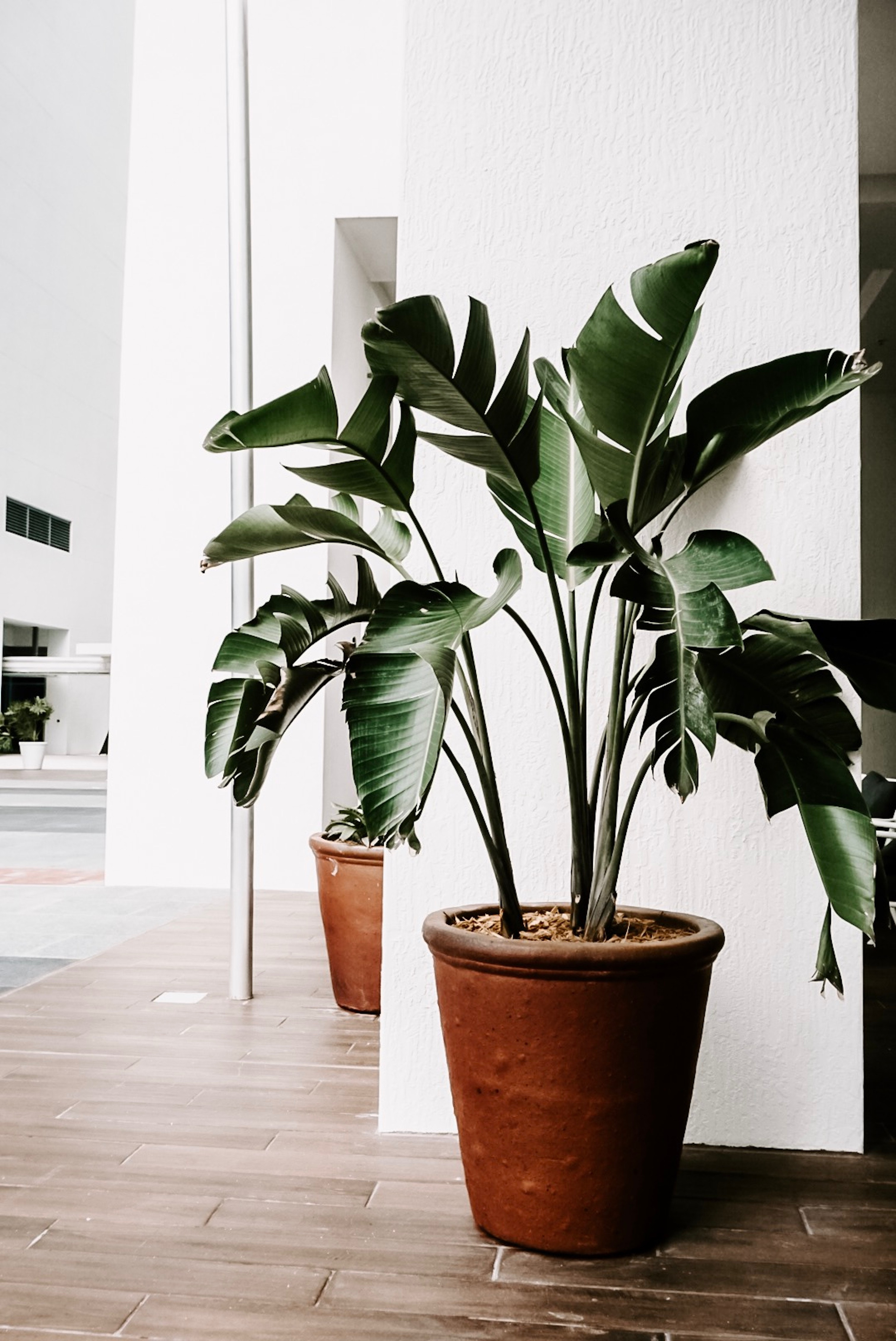 home decor trends, spring 2019, sustainable decor